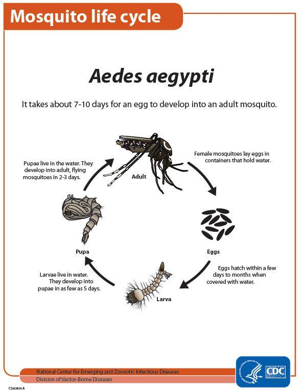 CDC life cycle