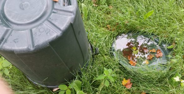 Trash can lid with larvae
