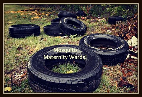 Mosquito maternity wards